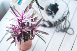 pink-plant-basket